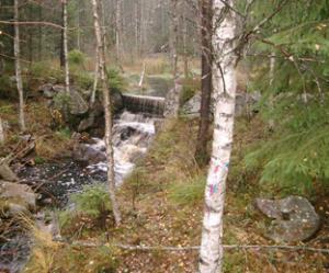 06Attsjo-Dammvall-12