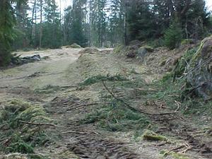 09Vagbank-skog