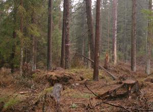 12Tjardal-Vastorp2001