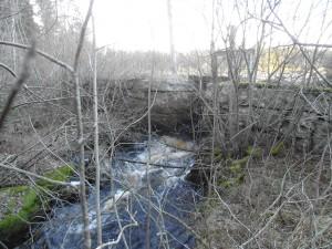 PICT0636 Visjön-dammvall