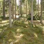 Gravfält stensträng Gunnarsryd