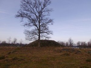 Vid Toftaholm-Älgarör-PICT0802