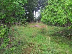 torp 20130808_093629 nära Förarpsmossen